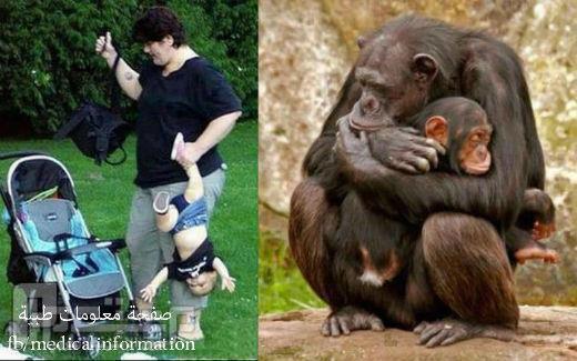 عندما تكون الحيوانات ارحم من البشر