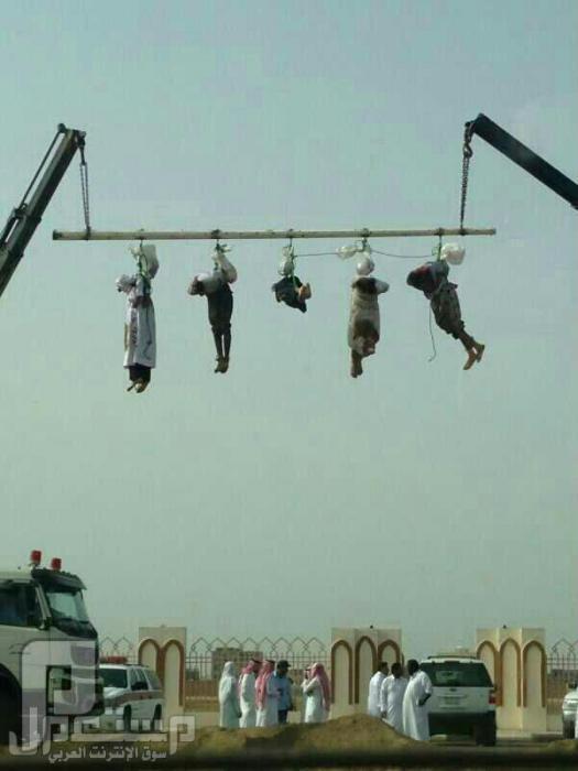 بالصور قصاص وصلب 5 يمنيين امتهنوا السرقة وقتلوا مواطن