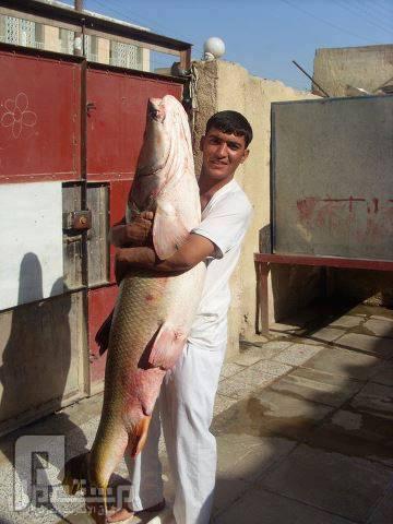 ماذا تقول عن هذه السمكه.سبحان الله ابوجاسم الورده