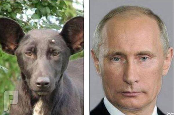 صورة لإهانة الرئيس الروسي تشبّهه بكلب في النظرة الفولاذية طبعا يكرم الكلب