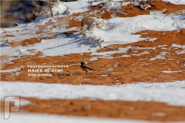 بالصور.. الأمطار والثلوج على تبوك تكسوها باللون الأبيض