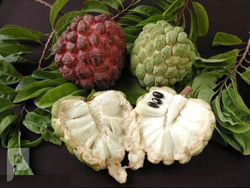 فاكهة تذيب السرطان وتقتله .