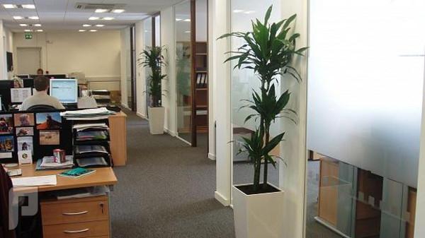 النباتات في مكان العمل تزيد نسبة تركيز الموظفين