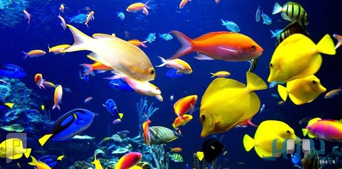 معلومات عجيبة لا تعرفها عن الأسماك
