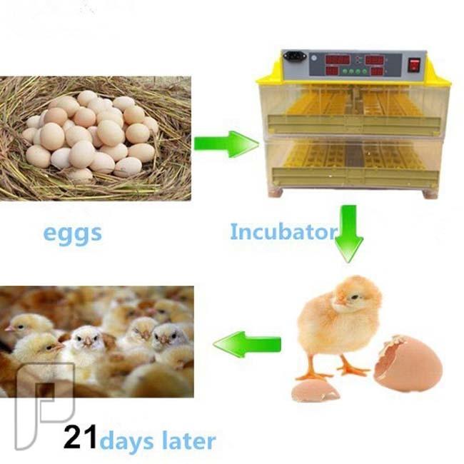 جهاز تفقيس بيض الطيور الأتوماتيكي الذي يسع ل 96 بيضة ويعمل بالكهرباء مراحل استخدام الجهاز حتى فقس البيض