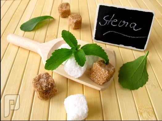 نبات ستيفيا أحد هدايا الطبيعية بديل السكر الطبيعي بفوائد رائعة