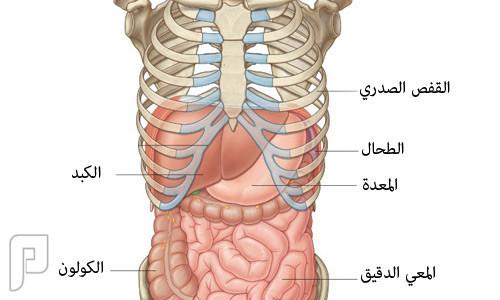 استشارة الله يحرم وجيهكم عن النار اسفل القفص الصدري من جهة اليمين