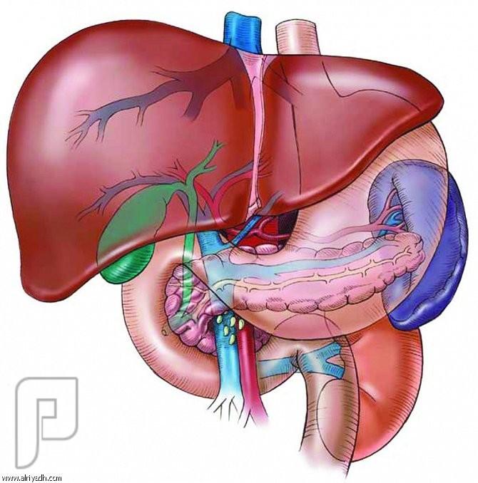 الزرنيخ.. يُتلف أوعية الكبد! الزرنيخ قد يتلف الاوعية الداخلية في الكبد