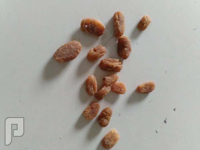 مجموعة بخور قديم نادرة
