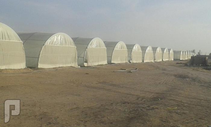 40 بيت محمي للايجار في الافلاج