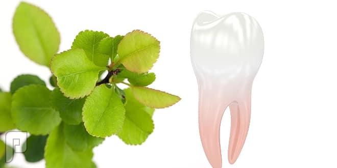 علاج ألم الأسنان بالأعشاب