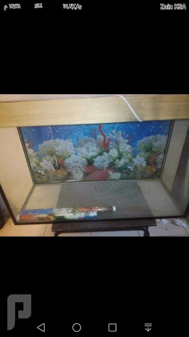 حوض سمك مفصل للبيع