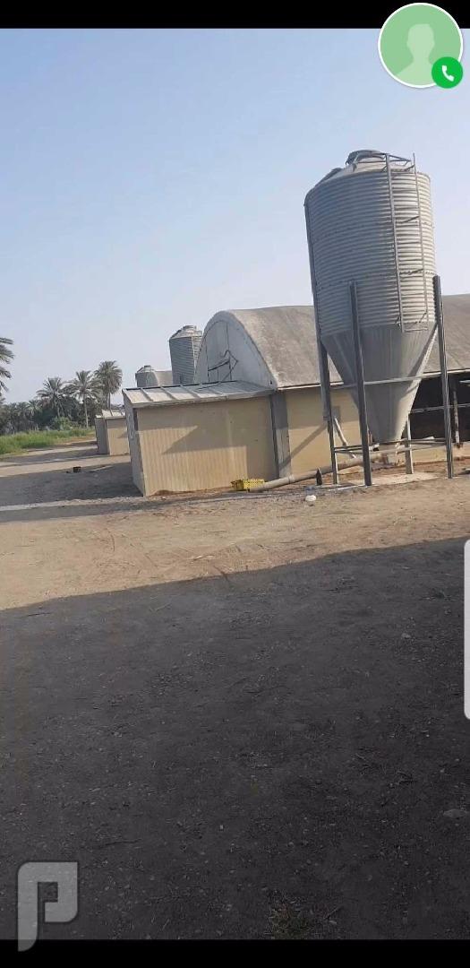 مطلوب شريك مزارع تربية الدواجن مزارعة دواجن الاستثمار