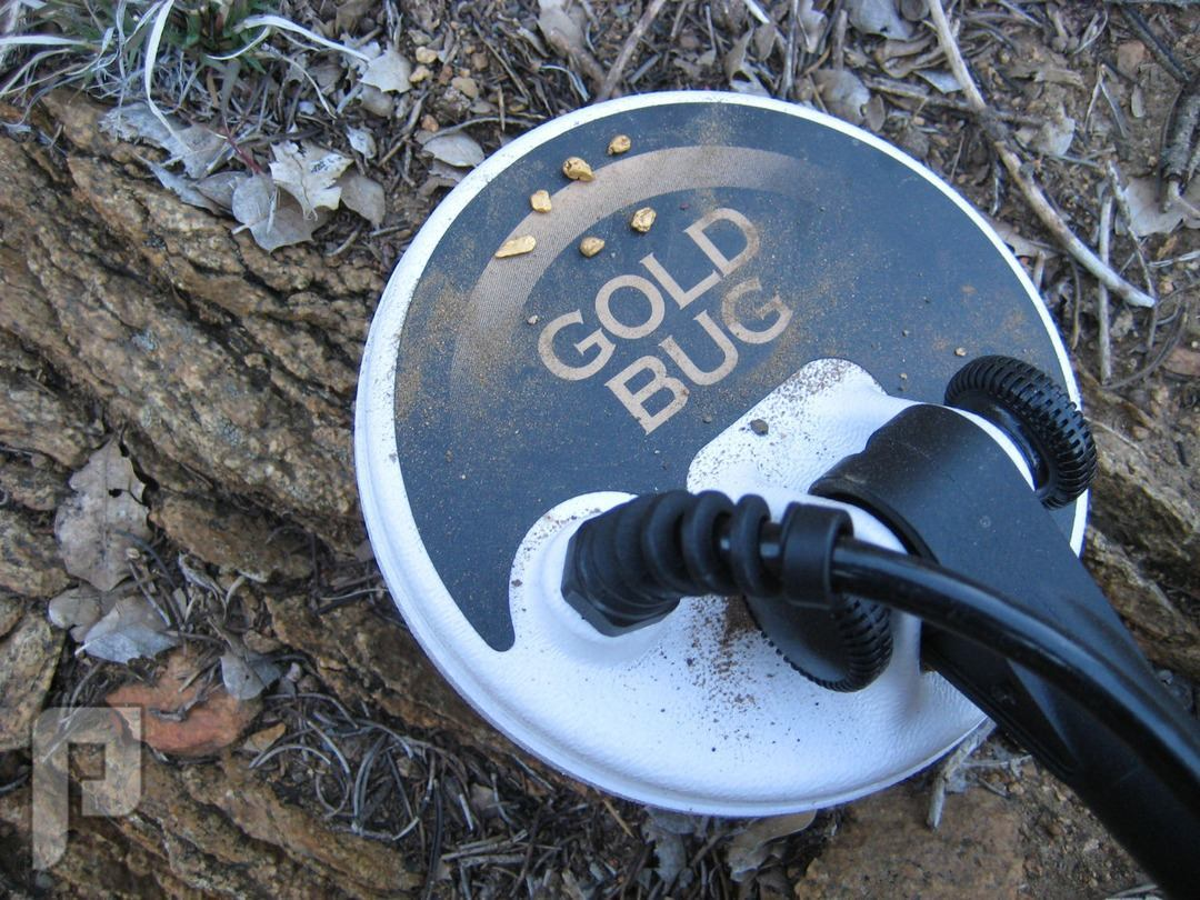 Fisher Gold Bug جهاز كشف الذهب الخام والعملات القديمة