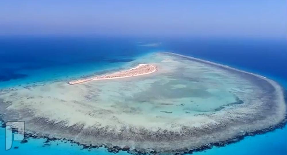 تخصصات مشروع «البحر الأحمر»