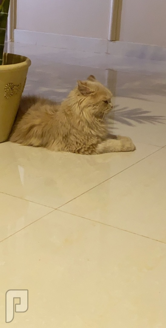 قطه معها كافة اغراضها ❤️❤️